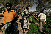 Community working at the agriculture lands.In Angola?s Namibe desert, at Giraul, in the Namibe province, Tchikuteny, from the Mucubal tribe, is the leader of a big family, maybe the biggest family in the world.<br /> He is the chief leader, the manager and responsible for the entire village. <br /> In his village, Tchikuteny lives nowadays with most of his big family, his 33 wives, that were once 43, but 10 left the village, and most of their descendants.<br /> Tchikuteny maintains the registry of all the new-borns, totalizing 154 sons, and his grandsons, that are around 60. Nowadays, 4 new babies are on the way, and 3 great grand children were born recently.<br /> Huge harmony, love and respect transpire in the village atmosphere. The sense of a community is the pillar of their sustainability and sustenance and their autonomy depends prominently on cattle and agriculture that is made by the villagers. Nevertheless, Tchikuteny village is in close connection with their surrounding communities. Children attend Giraul School and there is proximity and relations with the extended family that lives in the surroundings.<br /> Being the spiritual leader of the community, Tchikuteny is also responsible for the weekly religious works that happens in the village church. <br /> This big family opened his doors to share with us their daily lives.