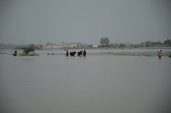 August 6, 2017 - Lahore, Punjab, Pakistan - A view of the flood affected area in Sadhoke village some 40km from lahore, Pakistan. Flood waters inundated the area due to a breach in the protective dyke of flooded Nullah Dek. (Credit Image: © Rana Sajid Hussain/Pacific Press via ZUMA Wire)