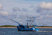 A shrimping boat works the waters along Morris Island in Charleston, South Carolina.