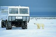 01874-10418 Polar bear (Ursus maritimus) and Tundra Buggy near Hudson Bay, Churchill  MB