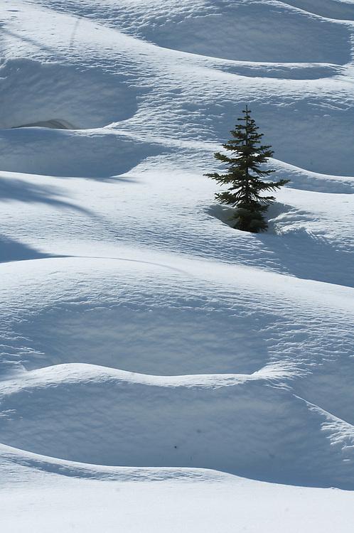 Lone evergreen crown protrudes through snow, winter, Desolation Wilderness, California, USA