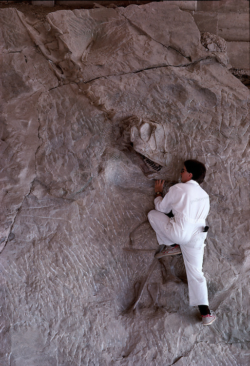Paleontologists have chiseled the remains of several hundred Jurassic dinosaurs from their rocky tomb since work began in 1909 at what became the Carnegie Quarry near Jensen, Utah.
