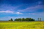 Łąki nad Biebrzą, Polska<br /> Meadows over Biebrza, Poland