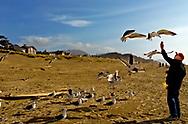 Feeding the gulls at Cannon Beach