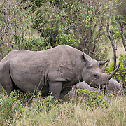 """Spotted the rare and endangered rhino in Kenya.<br /> <br /> For all details about sizes, paper and pricing starting at $85, click """"Add to Cart"""" below."""