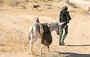 Israel, Negev desert, Bedouin shepherd with a donkey