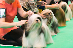 © Licensed to London News Pictures. 10/03/2016. A dog owner with their dog during a judging competition. Crufts celebrates its 12th anniversary as the Worlds largest dog show. Birmingham, UK. Photo credit: Ray Tang/LNP