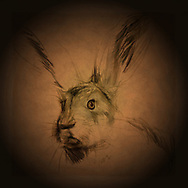 Painting of a hares head