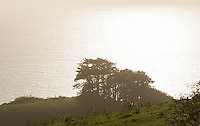 California coastal photography tour Big Sur.  ©2014 Karen Bobotas Photographer