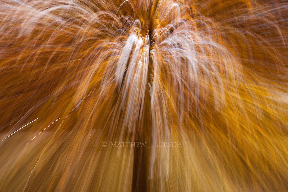 No Photoshop effect, just handheld camera motion creating fireworks with the autumn trees.