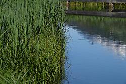 THEMENBILD - Landschaft, Fischteich mit Kammspitze nähe Gröbming, aufgenomen am 13.06.2020 in Gröbming, Österreich // Fishpond with crest top near Gröbming, pictureded on 2020/06/13 in Gröbming, Austria. EXPA Pictures © 2020, PhotoCredit: EXPA/ Erich Spiess