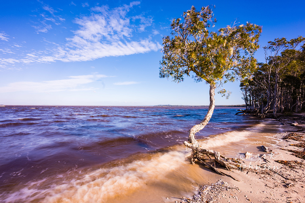 Long exposure photograph of paperbark trees on the shore of Lake Cootharaba, Elanda Point, Queensland, Australia