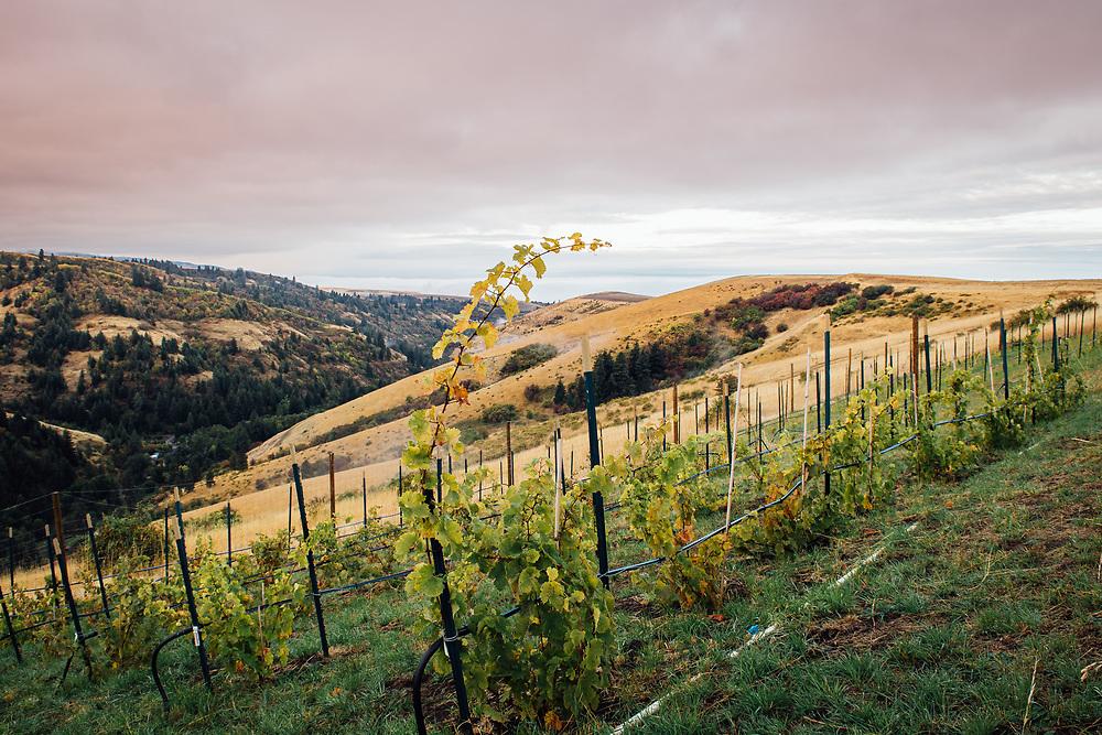 Lewis Peak Experimental Vineyard