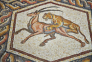 A lion hunting from the 3rd century Roman mosaic villa floor from Lod, near Tel Aviv, Israel. The Roman floor mosaic of Lod is the largest and best preserved mosaic floor from the levant region along the eastern Mediterranean coast. It is unclear whether the owners were Jewish, Christian or pagan but either way they would have been wealthy to own such a magnificent floor. The Shelby White and Leon Levy Lod Mosaic Centre, Lod, Israel. .<br /> <br /> If you prefer to buy from our ALAMY STOCK LIBRARY page at https://www.alamy.com/portfolio/paul-williams-funkystock/greco-roman-sculptures.html . Type -    lod  - into LOWER SEARCH WITHIN GALLERY box - Refine search by adding a subject, place, background colour, museum etc.<br /> <br /> Visit our ROMAN WORLD PHOTO COLLECTIONS for more photos to download or buy as wall art prints https://funkystock.photoshelter.com/gallery-collection/The-Romans-Art-Artefacts-Antiquities-Historic-Sites-Pictures-Images/C0000r2uLJJo9_s0
