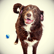 Senior dogs sometimes languish in the shelter as people opt to adopt younger dogs.