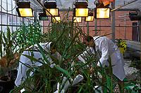 01-02/Septiembre/2016 Navarra. Pamplona.<br /> Instituto de Agrobiotecnología, IDAB, del CSIC en Pamplona.<br /> <br /> © JOAN COSTA / CSIC