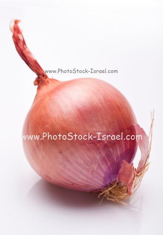 Whole red (Purple) onion on white Background