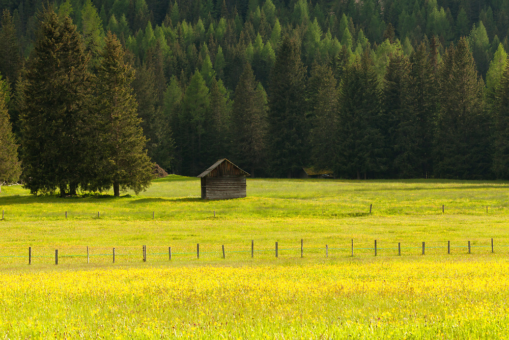 Meadows in the Dolomites