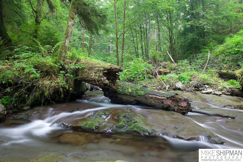 Necarney Creek flows through Oswald West State Park, Oregon, Tillamook County, USA