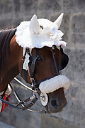 Lace bonnet for tourist attraction horse rides in Palermo, Sicily, Italy