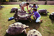(1992) At the San Diego Zoo in California, veterinarians draw blood from Galapagos tortoises for DNA fingerprinting. The samples will be used to repopulate the islands with the correct species. DNA Fingerprinting.