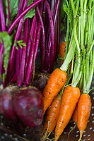 Still life of carrots and beets in a colander