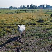 Groene Weide achter de haven van Huizen bij de Kalkovens