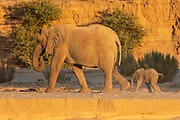 A desert elephant and her young calf (Loxodonta africana cyclotis) walking through the sandy Hoanib river bed, Skeleton Coast, Namibia