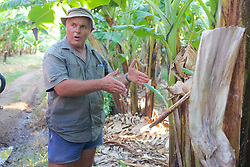 Darvi Explaining About The  Banana Plantation
