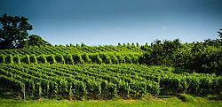 Vineyards near the village of Westhoffen in Alsace, France on the Routes des Vins<br /> <br /> (c) Andrew Wilson   Edinburgh Elite media