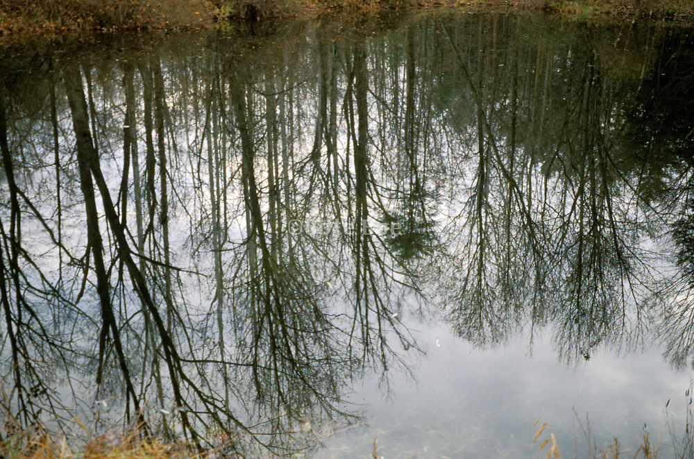 Silhouette of trees reflected in the water