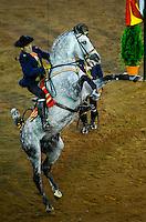 22-07-2013 Santander<br /> como bailan los caballos andaluces<br /> <br /> Fotos: Juan Manuel Serrano Arce