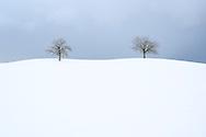 Ein Obstbaum und eine Linde (Tilia sp.) auf dem Rücken eines Hügels in der Drumlinlandschaft am Hirzel, Kanton Zürich, Schweiz<br /> <br /> A fruit tree and a linden (Tilia sp.) On the back of a hill in the Drumlin landscape at Hirzel, Canton of Zurich, Switzerland