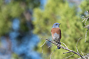 Photographs of Birds from Gila Valley New Mexico