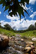 A stream flows through Gardner Canyon in July, Santa Rita Mountains, Coronado National Forest, Sonoita, Arizona, USA.