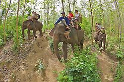 Group Riding Elephants