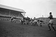 Kiely, the Irish forward, holds off the opposition as Irelands scrum, J C Kelly gathers the ball following a loose scrum, ..Irish Rugby Football Union, Ireland v Wales, Five Nations, Landsdowne Road, Dublin, Ireland, Saturday 17th November, 1962,.17.11.1962, 11.17.1962,..Referee- J A E Taylor, Scottish Rugby Union, ..Score- Ireland 3 - 3 Wales, ..Irish Team, ..T J Kiernan,  Wearing number 15 Irish jersey, Full Back, University college Cork Football Club, Cork, Ireland,  ..W R Hunter, Wearing number 14 Irish jersey, Right Wing, C I Y M S Rugby Football Club, Belfast, Northern Ireland, ..A C Pedlow, Wearing number 13 Irish jersey, Right Centre,  C I Y M S Rugby Football Club, Belfast, Northern Ireland, ..M K Flynn, Wearing number 12 Irish jersey, Left Centre, Wanderers Rugby Football Club, Dublin, Ireland, ..N H Brophy, Wearing number 11 Irish jersey, Left wing, London Irish Rugby Football Club, Surrey, England, ..M A English, Wearing number 10 Irish jersey, Stand Off, Landsdowne Rugby Football Club, Dublin, Ireland, ..J C Kelly, Wearing number 9 Irish jersey, Scrum Half, University College Dublin Rugby Football Club, Dublin, Ireland, ..M P O'Callaghan, Wearing number 1 Irish jersey, Forward, Sundays Well Rugby Football Club, Cork, Ireland, ..A R Dawson, Wearing number 2 Irish jersey, Forward, Wanderers Rugby Football Club, Dublin, Ireland, ..P J Dwyer, Wearing number 3 Irish jersey, Forward, University College Dublin Rugby Football Club, Dublin, Ireland, ..W J McBride, Wearing number 4 Irish jersey, Forward, Ballymena Rugby Football Club, Antrim, Northern Ireland,..W A Mulcahy, Wearing number 5 Irish jersey, Captain of the Irish team, Forward, Bective Rangers Rugby Football Club, Dublin, Ireland,  ..P J A O'Sullivan, Wearing  Number 6 Irish jersey, Forward, Galwegians Rugby Football Club, Galway, Ireland, ..C J Dick, Wearing number 8 Irish jersey, Forward, Ballymena Rugby Football Club, Antrim, Northern Ireland, ..M D Kiely, Wearing number 7 Irish jersey, Forward, La