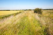 Raised flood defence dyke running through drained marshland in summer, Hollesley marshes, Suffolk, England, UK