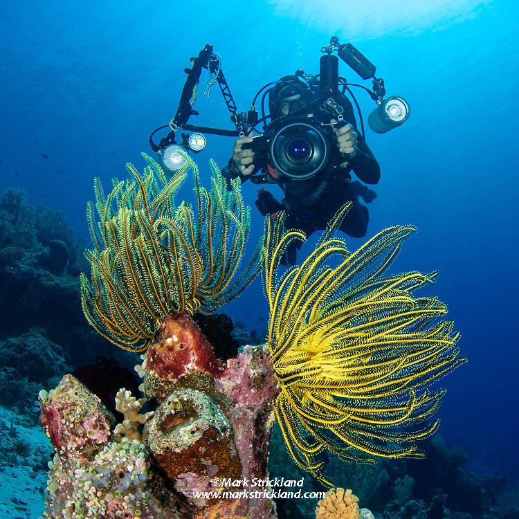 Boaz Samorai prepares to photograph a pair of crinoid feather stars at Apo Island Marine Preserve, Dumaguete, Philippines, Pacific Ocean