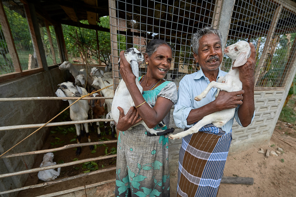 Annaletchumi Velayutham and her husband Velayutham Sinnaih hold their goats in the village of Karadianaru, Sri Lanka. The couple was displaced during Sri Lanka's bloody civil war, and when they moved back home after the fighting ended, a church group loaned them two goats. Three years later, they have over 30, and they've sold several goats to finance the expansion of their simple house and buy better seeds for their farm fields. They've also paid the loan off.