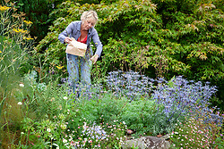 Carol Klein collecting seed from aquilegias