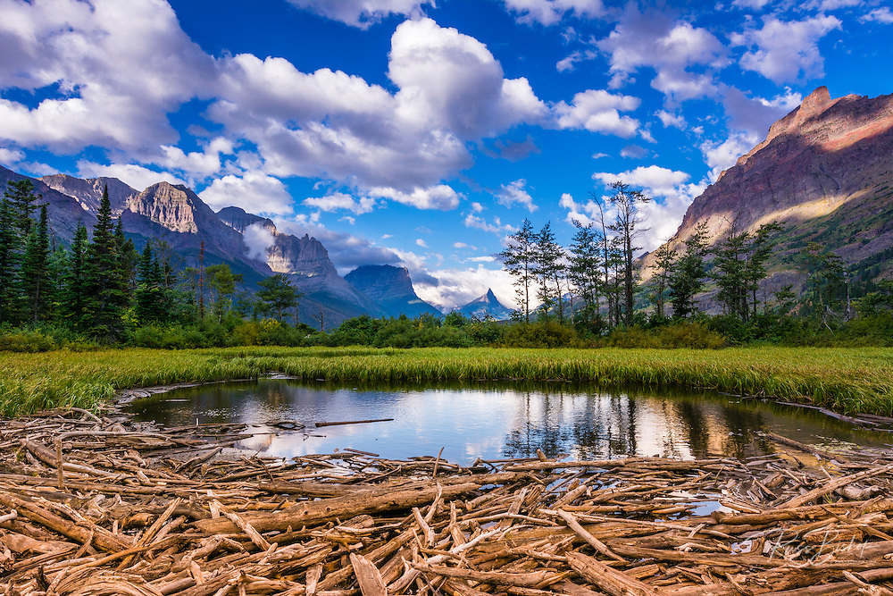 Driftwood and pond, Saint Mary Lake, Glacier National Park, Montana USA