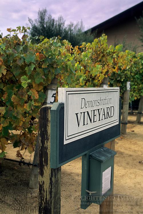 Demo vines, Edna Valley Vineyards, Edna Valley, near San Luis Obispo, San Luis Obispo County, California