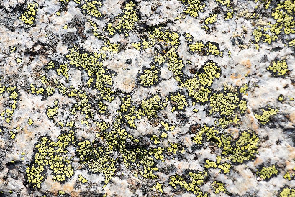 Lichen on a boulder in a basin in Oregon's Wallowa Mountains.