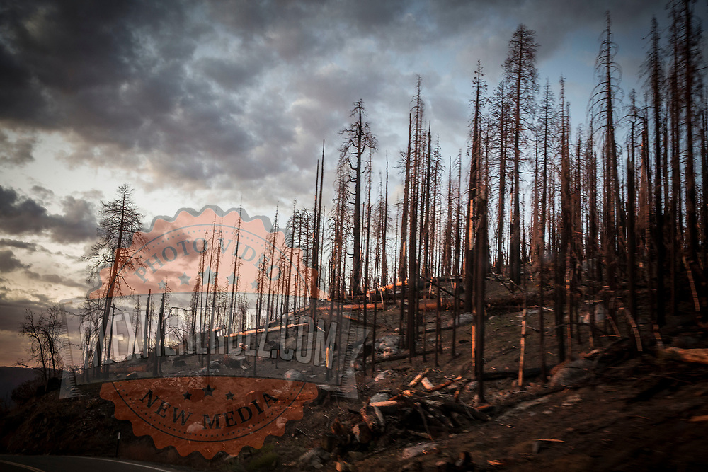 Remnants of a forest fire are seen with burnt trees inside Yosemite National Park on Sunday, September 22, 2019 in Yosemite, California. (Alex Menendez via AP)