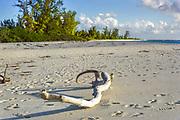 Driftwood on beautiful sandy tropical beach Bird Island,  Seychelles,  Indian Ocean, 1980