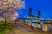 Cherry Blossom, Waterfront, Portland, OR.
