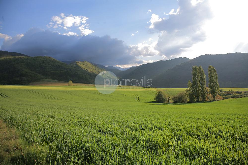 Campos de cereal en Estollo. La Rioja ©Daniel Acevedo / PILAR REVILLA