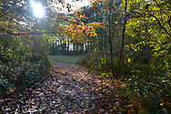 Path to autumn woodland glade, Stoke Wood, Oxfordshire.