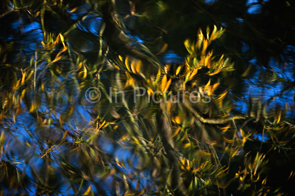 Water reflections of trees, 29th October 2016, on the River Stour at Flatford in East Bergholt, Suffolk, England.